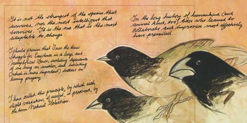 700_Finches